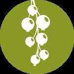Beerengut Bauerngemeinschaft Straden Ribisel